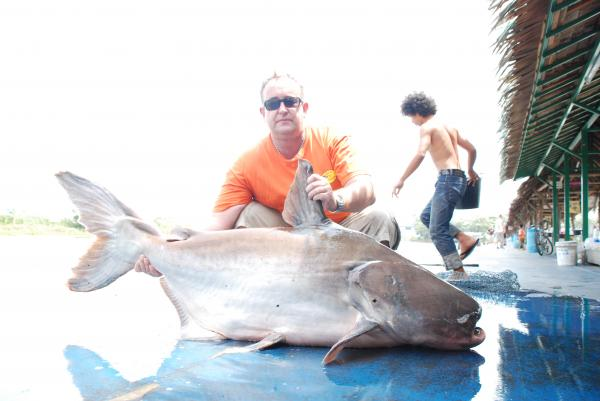 Giant Mekong Catfish caught from Bungsamlan Lake in Bangkok estimated 65kg.
