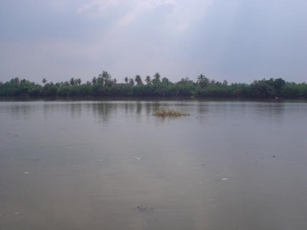 High tide at the Ban Pakong River in its lower reaches.