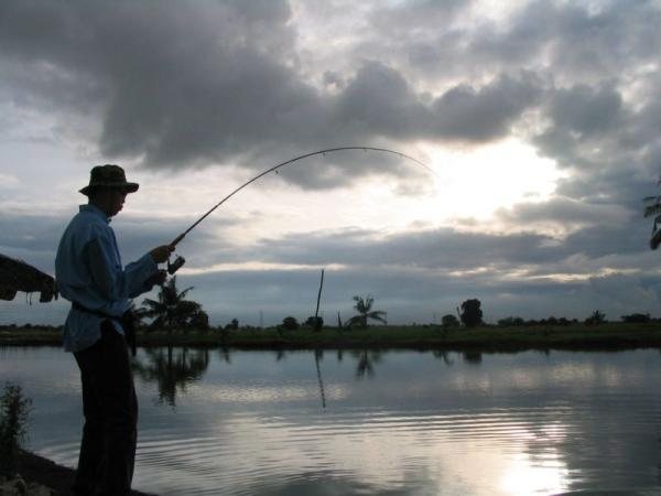 Atmospheric fishing conditions at the Barramundi ponds at Ban Pakong.