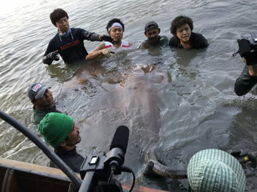 fishing in thailand for giant stingray