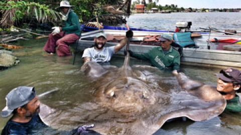 Yuri Grisendi lands a Giant Stingray at Maeklong River