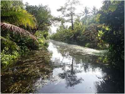 Amphawa Canal fishsiam